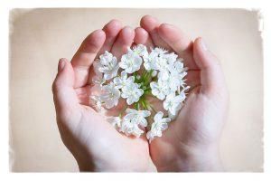 Hände mit Blüten